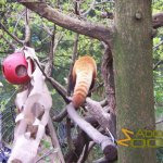 Central Park Zoo, Red panda enrichment