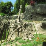 San Diego Zoo, Bonobo enclosure