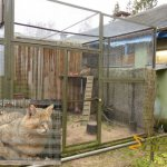 Tallinn Zoo, Jungle cat (Felis chaus) enclosure