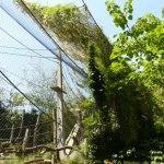 Basel Zoo, Great ape exhibit - the additional netting provides shade and shelter