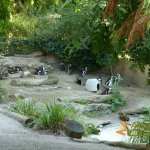 Basel Zoo, Black-footed penguin enclosure (part of)
