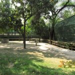 Delhi Zoo, National Zoological Park, Semi-circle of aviaries