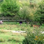 Port Lympne Wild Animal Park - African experience, Ostrich and greater kudu