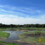 Hilvarenbeek Zoo, African savannah, wetland after heavy rainfall