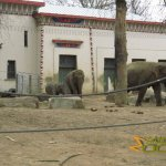 Antwerp Zoo, Asiatic elephants outside the Egyptian temple