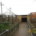 London Zoo, Boardwalk leading to Tiger Territory, tigers left, gibbons right