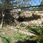 Santa Barbara Zoo, Snow leopard enclosure