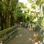 Pukaha Mount Bruce NWC, Boardwalk from the visitor's centre to the park