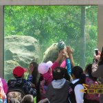 San Francisco Zoo & Gardens, Enrichment for children and grizzly bear: honey on window