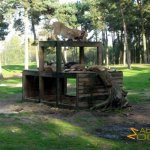 Hilvarenbeek Zoo, African lions on platform
