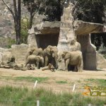 San Diego Zoo Safari Park, African elephants getting ready for photoshoot