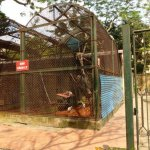 Hanoi Zoo, Overflow enclosure for primates