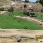 San Diego Zoo Safari Park, African Plains with buffalo, giraffe and rhinoceros