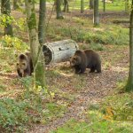 Wildlife park Anholter-Schweiz, Brown bear forest with enrichment feature