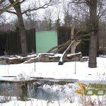 Plzen Zoo, Chimpanzee outdoor enclosure