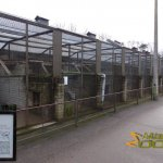 Tallinn Zoo, Row of old-fashinoed cages with Manul or Pallas' cat