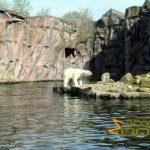 Gelsenkirchen Zoo, Polar bears