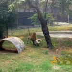 Delhi Zoo, National Zoological Park, after the deed