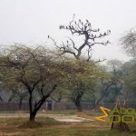 Delhi Zoo, National Zoological Park, Kites, city dwellers, in the park