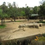 San Diego Zoo, Mixed-species exhibit with southern gerenuk, lesser kudu and Speke's gazelle