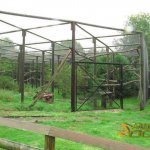 Port Lympne Wild Animal Park, Siberian lynx enclosure