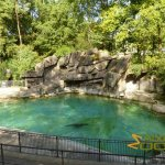 Basel Zoo, Old-fashioned sea lion pool - built in 1921