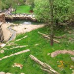 Antwerp Zoo, New African lion enclosure, finished