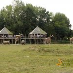CERZA Zoo, CERZA Parc Zoologique Lisieux, African Plain with popular visitors' lookouts
