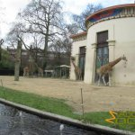 Antwerp Zoo, Giraffes outside the Egyptian temple