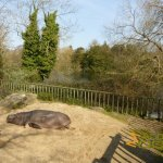 Dublin Zoo, Hippopotamus in its enclosure with the lake in the background