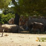 La Barben Zoo, White rhinoceros and blue wildebeest