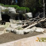 San Diego Zoo, Bear enclosure with one of the grizzly bear brothers