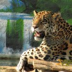 Athens Zoo, Jaguar (male)