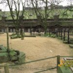 Antwerp Zoo, Damara zebra & Cape buffalo enclosures