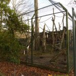 Krefeld Zoo, Black-and-white colobus enclosure where a young rascal breaks out frequently