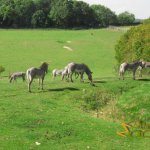Marwell Wildlife, African valley with Grevy's zebra
