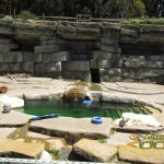 San Francisco Zoo & Gardens, Polar bear in the enclosure with pool