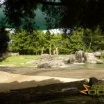 Auckland Zoo, Asian elephant paddock