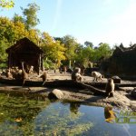 Amersfoort Zoo, Hamadryas baboons and Barbary sheep in exhibit of the 'Ancient City'