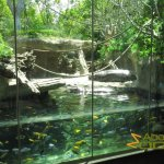 San Diego Zoo, Mixed-species exhibit with pygmy hippos, fish and Wolf's guenon