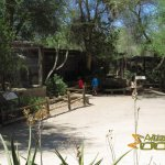 The Living Desert Zoo & Gardens, Old-fashioned cages for small African predators