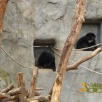 Frankfurt Zoo, The two one-year-old spectacled bear cubs