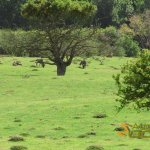 Port Lympne Wild Animal Park - African experience, Wildebeest