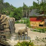 Los Angeles Zoo and Botanical Gardens, Elephants of Asia, 2.5 hectare