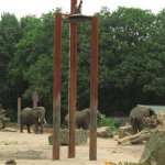 Rhenen Zoo, Ouwehands Dierenpark, Elephant shower