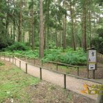 New Forest Wildlife Park, Typical scenery