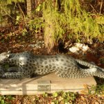 Shona-Art at Krefeld Zoo - 2016, Leopard by Sydney Majengwa