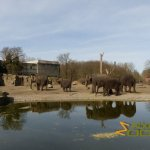 Tierpark Berlin, View on Asian elephant exhibit