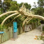 Auckland Zoo, Entrance of Te Wao Nui, with artificial whale skeleton