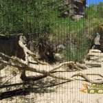 The Living Desert Zoo & Gardens, Example of viewing window with electrical wire
